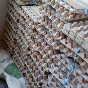Kodumela eggs