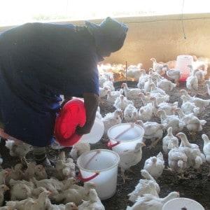 Thuthukani Chickens