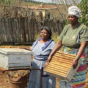 Thandokuhle Beekeeping1