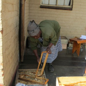 Thandokuhle extracting honey