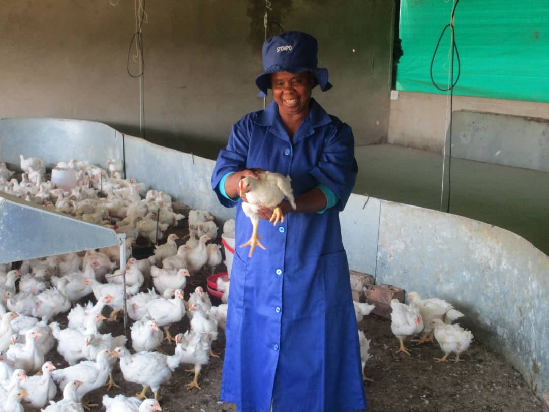 Thuthukani woman holding a chicken, Thuthukani poultry project, a Nozala Trust initiative